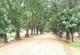 SANDEMA RESIDENTS WANT CANOPY TREES SAVED IN FLOOD PREVENTION PROJECT